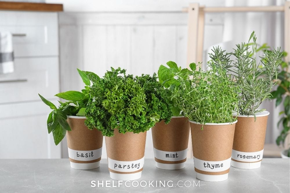 kitchen herb garden in paper cups, from Shelf Cooking